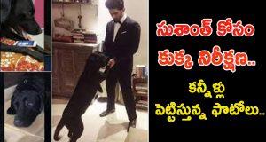 sushanth singh dog