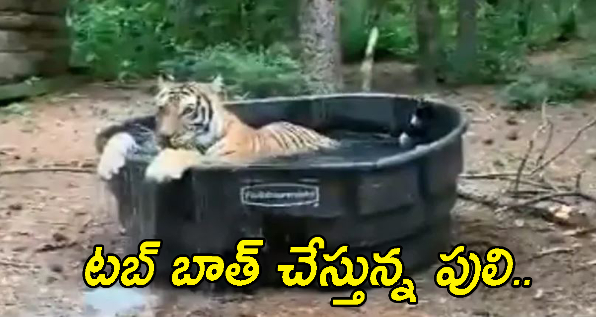 Tiger Tub Bath