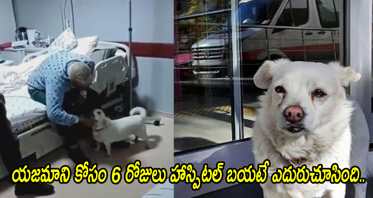 Dog Waiting for owner