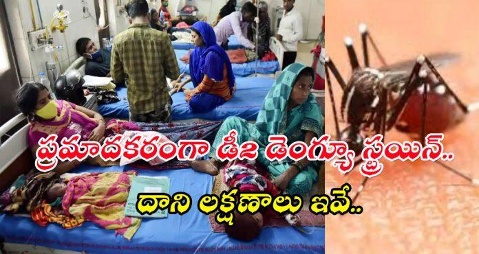D2 Dengue Strain